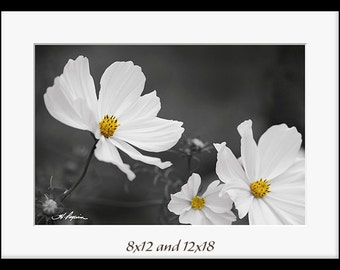 Flower wall decor PRINT and CANVAS gallery wrap Artwork Black and white yellow Home photo Living room Bathroom Fine still life picture gift