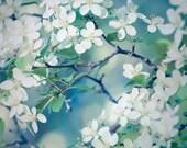 Nature Photography, Art Print, Spring Flowers, Blue Green, Wall Art, Spring Blossoms, Springtime, Home Decor, 5x7 8x10 11x14 or 16x20 Print - RockyTopPrintShop