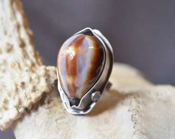 Wet Sheep Eye Ring Made With A Cowrie Shell
