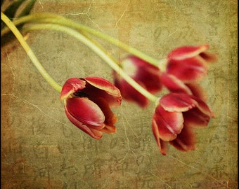 Red Tulips on Green--Yearning--Fine Art Photograph