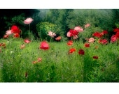 Poppies, Red Poppy Print, Poppy Photo, Garden Photo,  Landscape Photography,  Nature Photography,  Poppy Art,