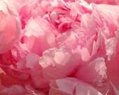 Pink Plaza Peony - Ruffled Romance - Original Colour Photograph by Suzanne MacCrone Rogers