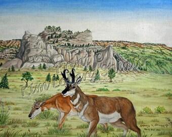 Wildlife Art Pronghorn buck doe Sandhills bluff Nature wild animal ACEO mini art PRINT Kim Loberg Nebraska Artist EBSQ