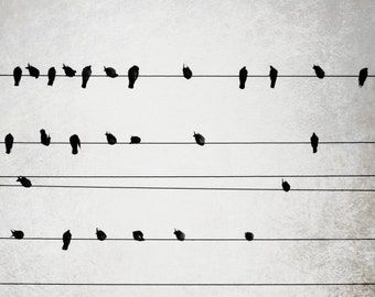 Birds on wires black white photography city power lines minimal  pale gray modern urban large wall art - Harmony