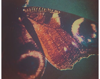 BUTTERFLY | photography print