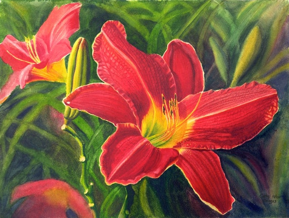 Red Daylily Art Watercolor Painting Print By Cathy Hillegas