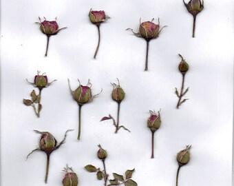 digital collage sheet  rose buds pink