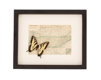 Vintage Framed Map of Tennessee with Real Tiger Swallowtail Butterfly