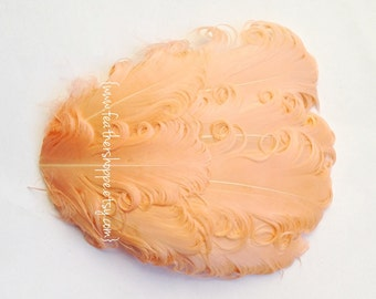 Feather Pad - 1 Peach Nagorie Curled Goose Feather Pad