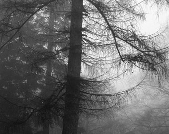 """Tree of Light & Dark, print of black and white photograph 8.25""""x 8.25"""", signed by the artist"""