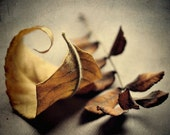 Fall leaves closeup yellow golden tan brown rustic autumn decor still life - Autumn leaves 8 x 10