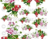 Instant Digital Download Vintage Pink Red Geraniums Floral Flowers Clip Art PNG - Instructions to make Waterslide Decals Bonus! ECS