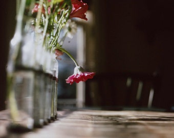 Fine Art Photography, Flower Photography, Shadows and Light, On the Table Photography, Daisy Photography, Red Flower Photography, Mood Photo
