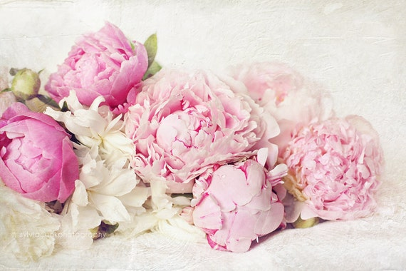 Peony photograph,pink peonies,shabby chic, fine art print, floral photography, pink, aqua,cottage decor