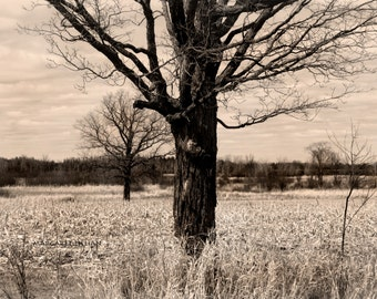 Trees in the Field - 8X10 Fine Art Photograph