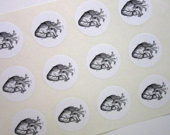 Anatomical Heart Stickers One Inch Round Seals
