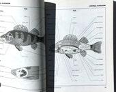 Visual Dictionary 1986