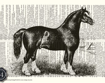 HORSE ART Dictionary Art Print Vintage Dictionary Page Upcycled Book Horse Home Decor Horse Wall Decor Horse Illustration Horse Drawing