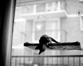 Black, Grey - Curious Cats Window Perch