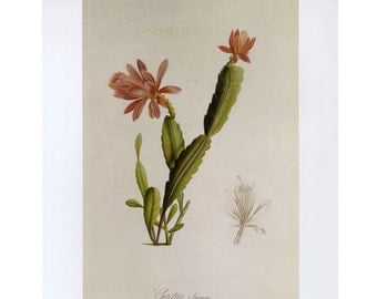 Cactus Print Botanical Book Plate SALE~~Buy 3, get 1 Free Book Plates