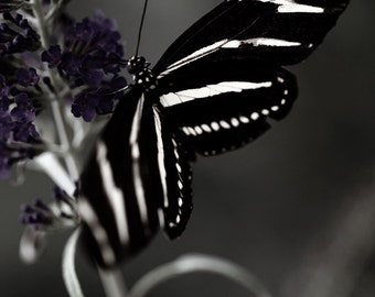 Dreamy Black and White Butterfly, Butterfly Art, Home Decor, Black and White, Wings, Garden, Fashionable, One of a Kind,  Photography Art
