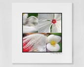 """Feather white, a 3x3"""" photographic print in a 5x5"""" white, acid free black core mat, frames available"""