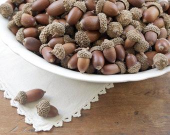 Acorns with Caps - 50 Dried Natural Acorns