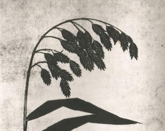 etching, Weeping Grass, modern, minimal, original print