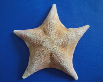 "Seashells Sea Shell 4.5"" Bat Starfish"