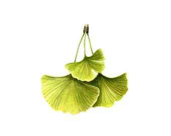 Ginkgo Leaf, watercolor painting