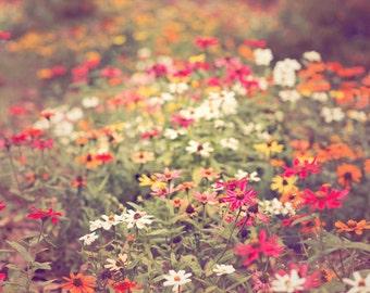 Landscape flower print, colorful flower photography, cottage home decor, floral artwork, flower photography, multicolor flower print