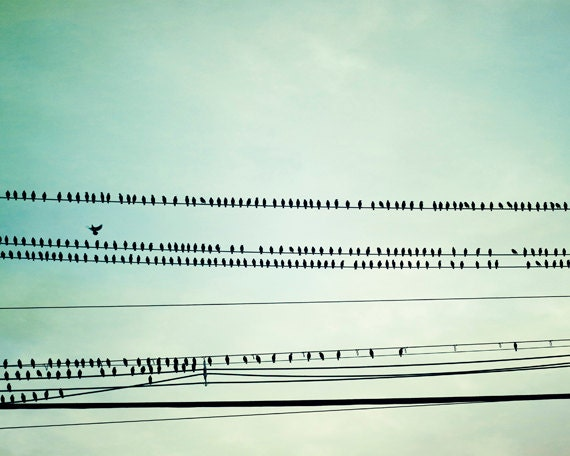 "Bird on Wire Photography - mint green print nursery wall art baby pale teal blue green turquoise blue - 24x30 Photo, ""Birds of a Feather"""