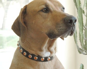 Custom Leather Dog Collar - Black Leather with Orange Rivets. Size Medium to Large or Custom.