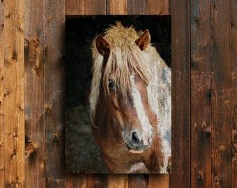 The Portrait - Horse art - Horse decor - Horse canvas art - Horse photography -  canvas - Horse decor - Horse art