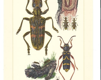 4 - ORIGINAL ART 1950's Bug Art, Insect Art, Offset Lithographs  by  Erich Cramer,  German Beetles Realism Images #10