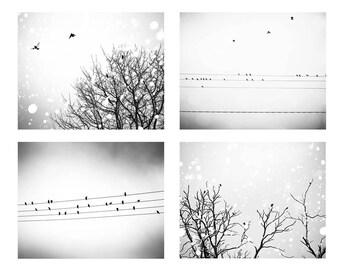 birds photography black white birds in trees photo print set 8x10 8x12 Fine art photography birds on wires decor winter photography gray art