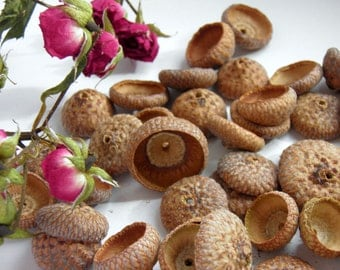 Acorn Caps, Set of 50 with or without  holes , Natural Jewelry , Nature, Rustic Autumn Crafts, Natural Acorn, Supply.