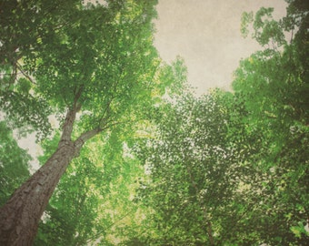 Nature Photograph, Green Picture, Tree Wall Art, Forest Photography, Summer Home Decor