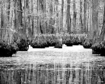 Black and White Photography Bayou Louisiana Moss Cypress Trees 8x10 Swamp Lake Photo Water Swamps and Bayous Art Print Cabin Art Print 8