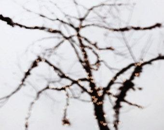 hearts, love, tree, nature, bokeh, blur, fine art photography