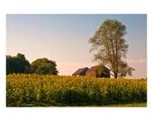 Evening on the Sunflower Farm 11x14 Fine Art Photo Print