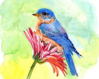 Art print - Bluebird sitting on a gerbera daisy