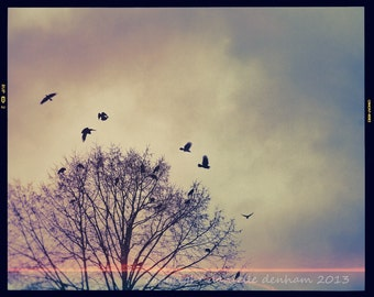 Landscape Photography Bird and Tree Photo Crows Blackbirds Winter--Fine Art Lomography 8x10
