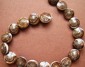 Sea Shell Beads (Conus figulinus)