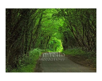 Country Road Photo, Woodland Path, Emerald Green, England, Tree Photography, Travel Photography