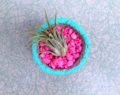 air plant + mini concrete planter with pops of neon blue & pink. handmade modern home decor.