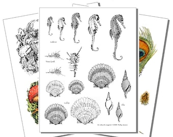 Printed Pyropaper, Seashells, Feathers, and Plants (Set 3)