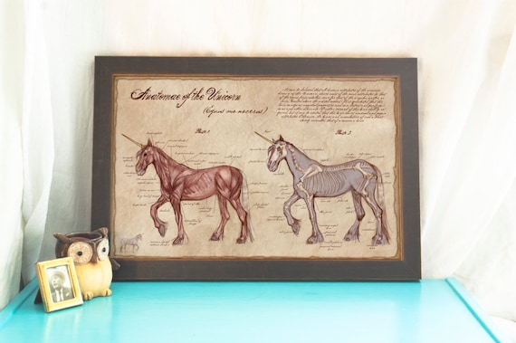 Anatomy of the Unicorn // Illustrated Unicorn Poster // Medical Illustration Print // Home Decor // Scientific Art Print // Fantasy