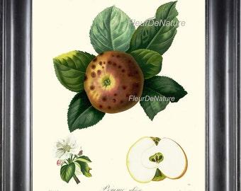 BOTANICAL FRUIT PRINT Poiteau 8x10 Botanical Art Print 2 Beautiful French Apple Pomme Oleose Plant to Frame Antique Writing Wall Home Decor