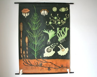 Vintage. Pull down chart. Jung Koch Quentell. Botanical. School. Science. Poster Mid Century German DDR. Educational Canvas Horsetail (511)